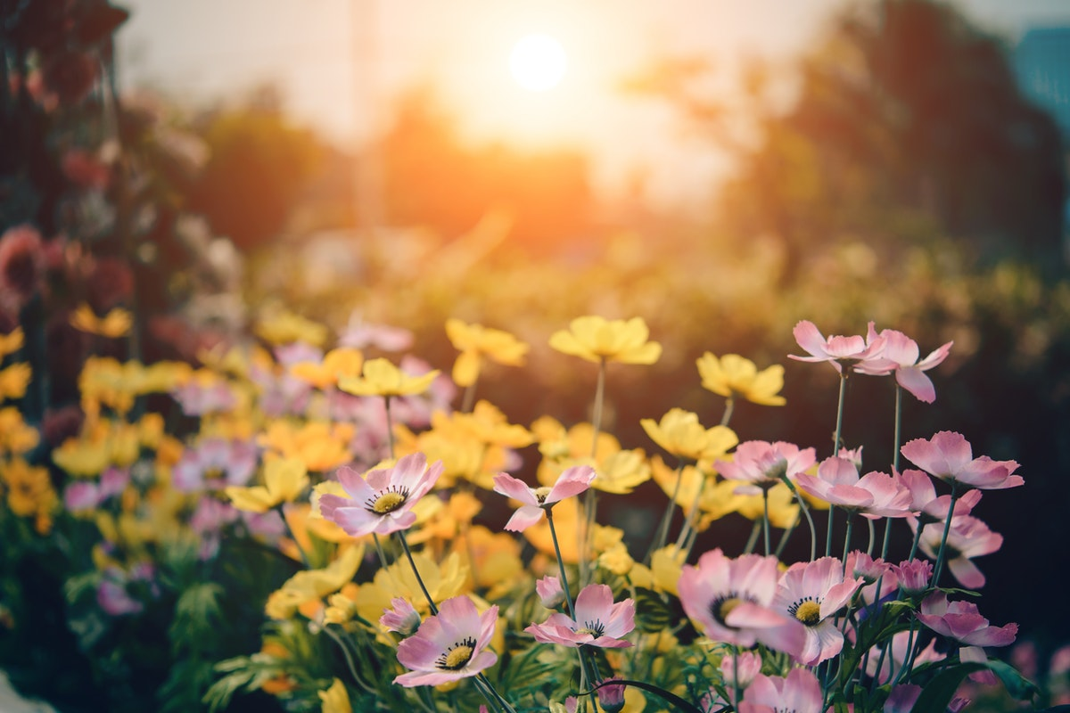 Six Daily Habits to Help You Go Greener