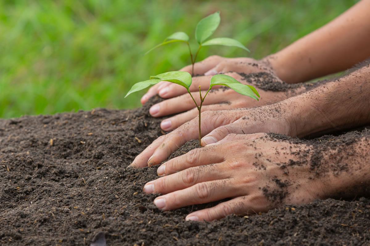 Five Things You Can Do to Celebrate Earth Day This Year